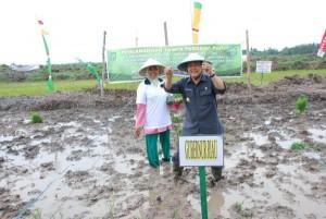Permalink ke KEJAR PRODUKSI BERAS… Gubernur Tanam Bibit Perdana di Sawah Baru