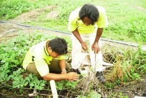 Petani Binaan CSR RAPP Mengikuti Pelatihan Budidaya tanaman semangka di BPPUT CSR RAPP Pangkalan Kerinci.