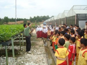 Para siswa SD Global Andalan PT.RAPP dan para siswa di kawasan Estate Baserah Kabupaten Kuantan Singingi melakukan kunjungan ke areal pembibitan akasia.