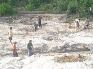 Permalink ke Riaupulp Estate Logas dan Cerenti Tanam Pohon di Areal Bekas Peti
