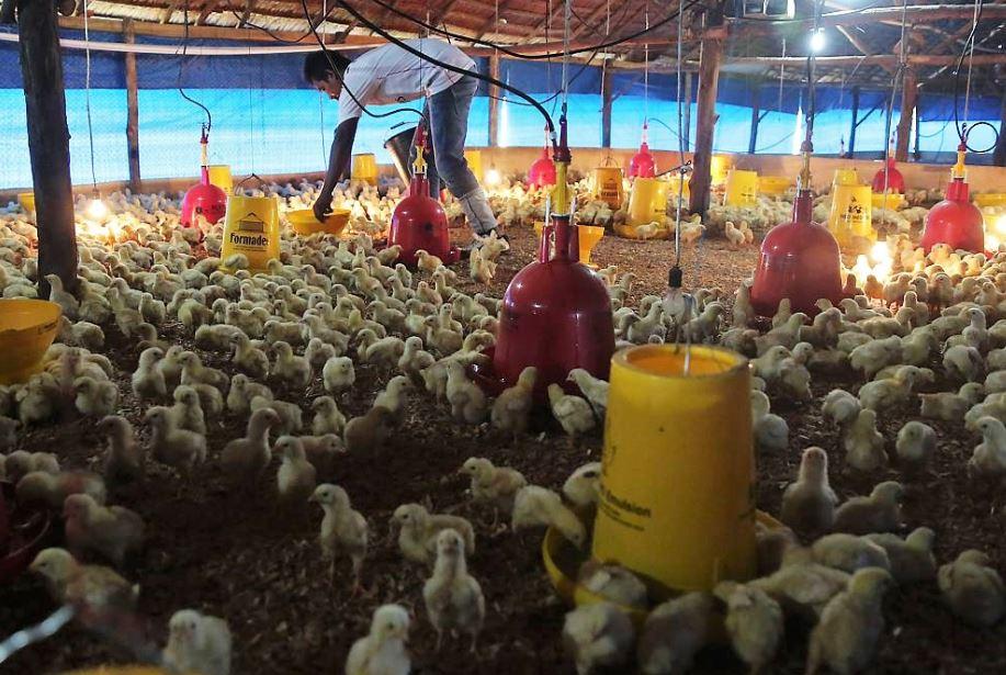 Foto 1_Serah terima bantuan kandang untuk 3500 ekor ayam dan sarana produksi ternak dari Chevron untuk kelompok tani komite handalan melayu di Desa Sebangar Kecamatan Mandau Kabupaten Bengkalis