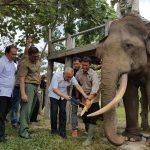 Gubernur Riau kunjungi Taman Nasional Tesso Nilo (TNTN) di Kab Pelalawan Prov Riau