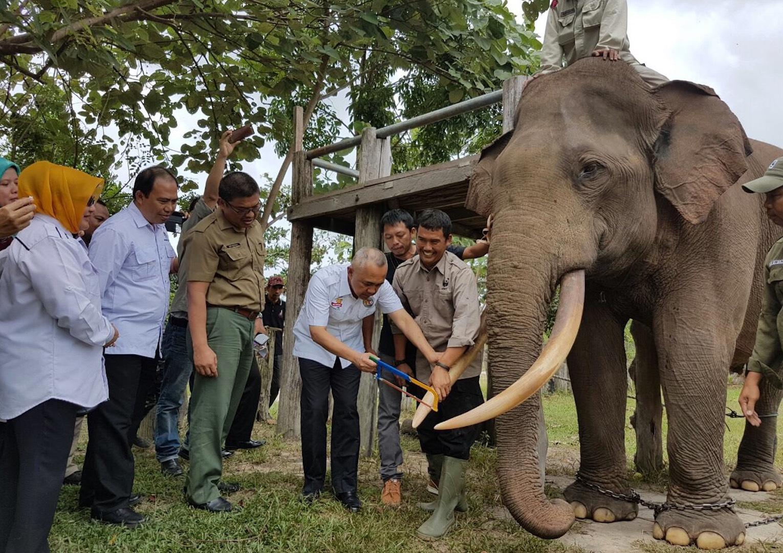 Permalink ke Gubernur Riau kunjungi Taman Nasional Tesso Nilo (TNTN) di Kab Pelalawan Prov Riau