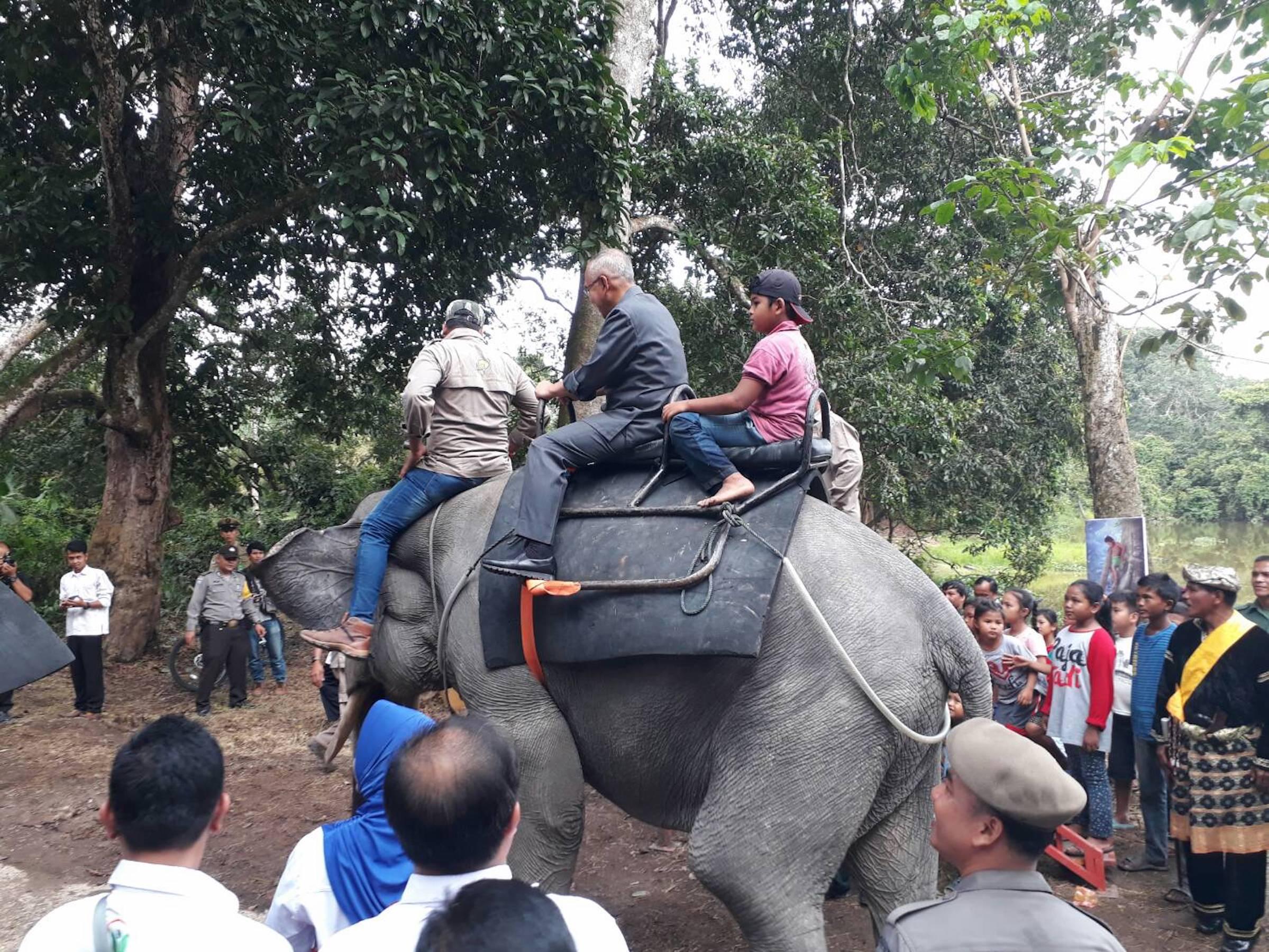 Gubri H Arsyadjuliandi Rachman menaiki Gajah saat kunjungan ke Wisata Rimbo Tujuh Danau Buluh Cina di Desa Buluh Cina Kab Kampar