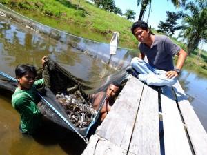 Permalink ke Kelompok Pertanian Terpadu Sakai Duri Berhasil Kembangkan Usaha