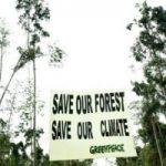 Greenpeace Mengkonfrontasi Deforestasi di Kebun Kelapa Sawit