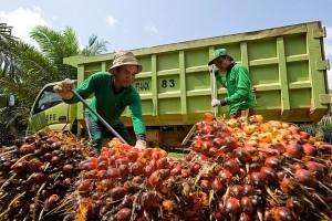 Permalink ke Harga TBS Sawit Riau Periode 21-27 Oktober Turun